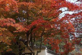 【加西市】法華山一乗寺の紅葉が見ごろ|特別展も開催中