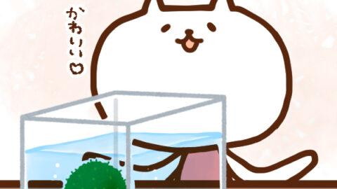 【今日はなんの日】3月29日 マリモ記念日