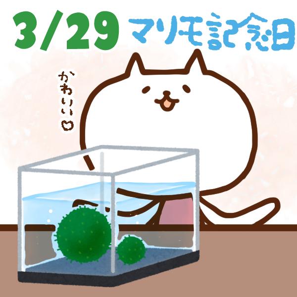 【今日はなんの日】3月29日|マリモ記念日