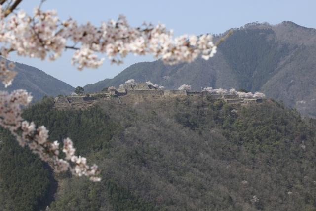 【朝来市】天空の城とじいじの桜|ナレーション「有村架純」ytvドキュメント