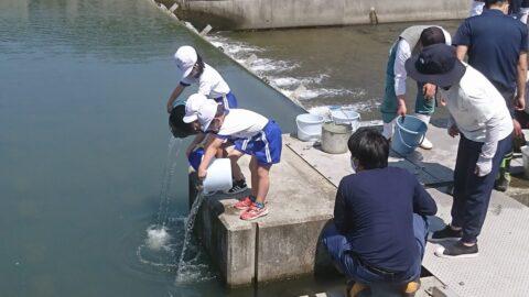 【市川町】さかないっぱいの岡部川になーれ|岡部川へウナギの放流体験