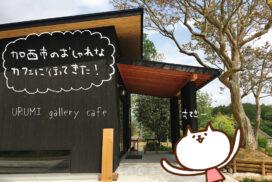 (ねこレポ)URUMI gallery cafeがオープンしたので行ってきた|加西市
