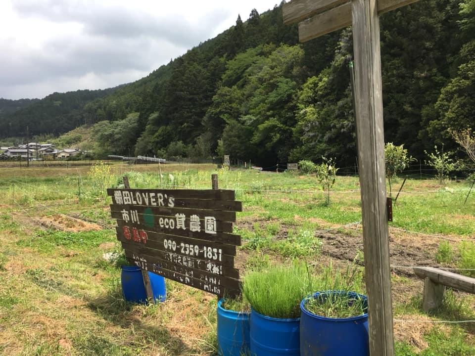 【市川町】瀬加城山の藤棚が見ごろ GW中の「まちの駅」