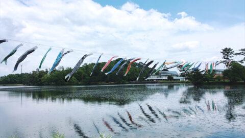 【加西市】鯉鯉(コイコイ)まつりとバラ園|兵庫県立フラワーセンター