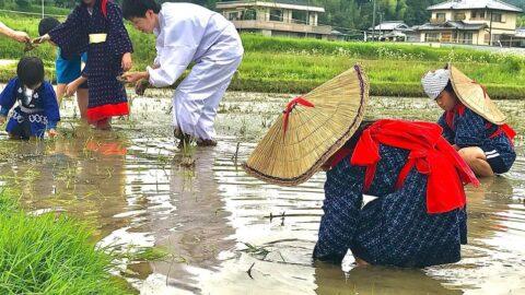 【加西市】五穀豊穣や子孫繁栄願い、日吉神社で御田植祭