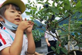 【市川町】笠形ブルーベリー園 オープン 自然の恵みをそのままに