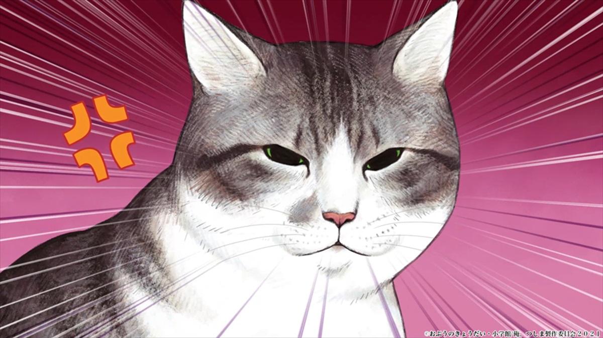 『俺、つしま』人気リアル猫漫画が7月2日、TVアニメ放送開始