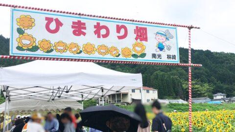 【作用町】「南光ひまわり祭り」開催。57万本のヒマワリや迷路