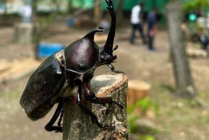 【宍粟市】えばらの森 かぶと虫ドーム、今期オープン|20種類以上の外国勢にも逢える