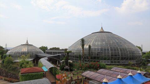 手柄山温室植物園