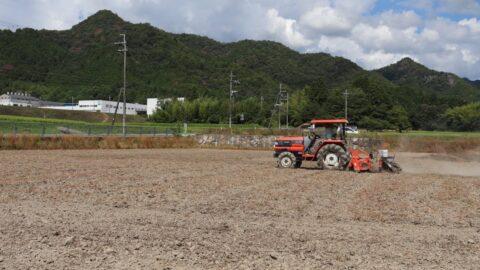 【市川町】10月上旬に開花。奥の田にヒマワリの種まき