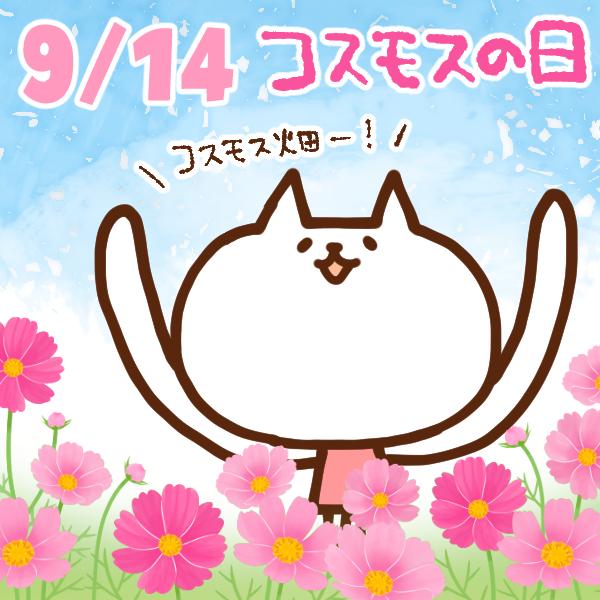 【今日はなんの日】9月14日|コスモスの日