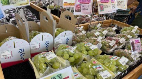 【加西市】かさい愛菜館で『ぶどう感謝DAY』