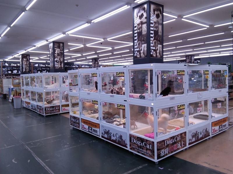 ホームセンタームサシ姫路店、リニューアル ヤマダデンキも2階にオープン