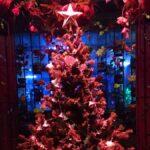 【加西市】花と光のクリスマス|冬の夜の幻想的なイルミネーション