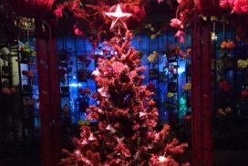 【加西市】花と光のクリスマス 冬の夜の幻想的なイルミネーション