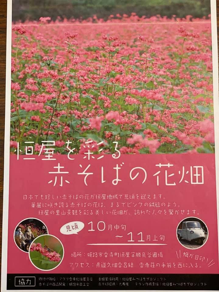 【姫路市】赤ソバの可憐な花が満開。観光でイノシシに睨みを利かせたい!香寺町恒屋